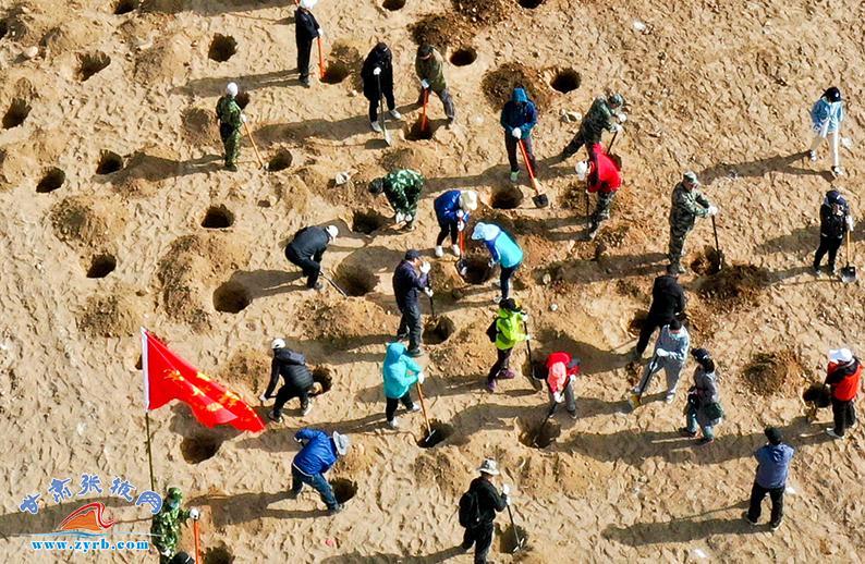 4月15日,张掖干部职工和社会各界群众来到张肃公路黑河大桥西南侧黑河滩万亩常青林基地植树现场,挥锹铲土、挖坑、栽苗。(无人机航拍)