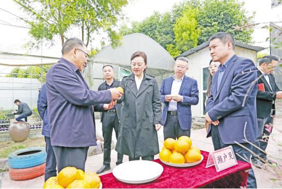 4月9日,荣昌区委书记卢红在重庆橙垦农业发展有限公司苗木繁育基地调研产业发展情况。