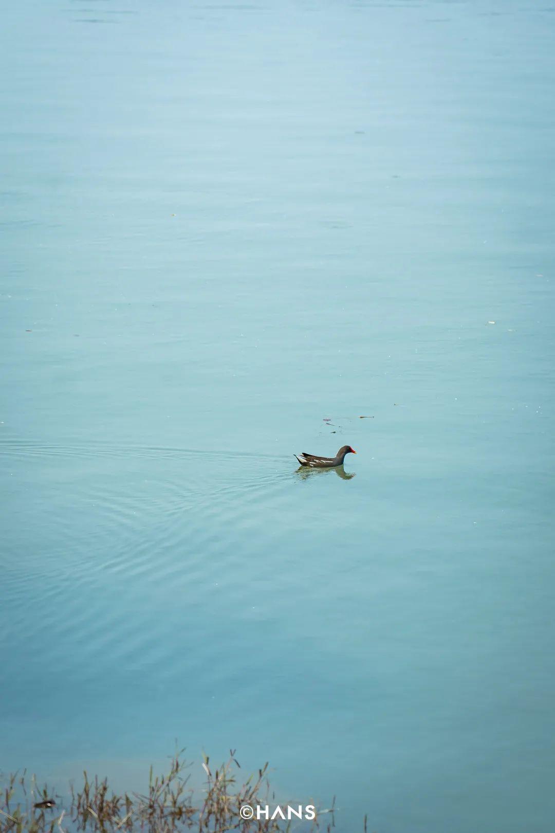 误入东湖神仙小岛,渔民打工仔和英国人一起躺平晒太阳