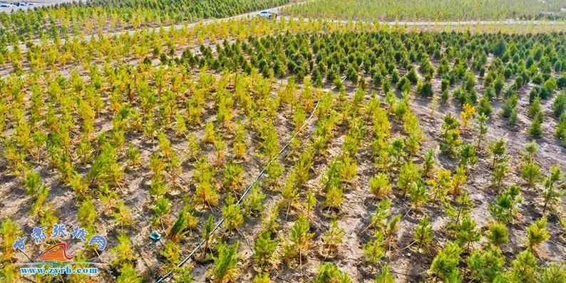 万人掀起春季绿化热潮 今年张掖料全民义务植树近2万亩