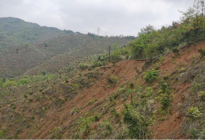 图4  水土保持措施落实不到位造成山体滑坡