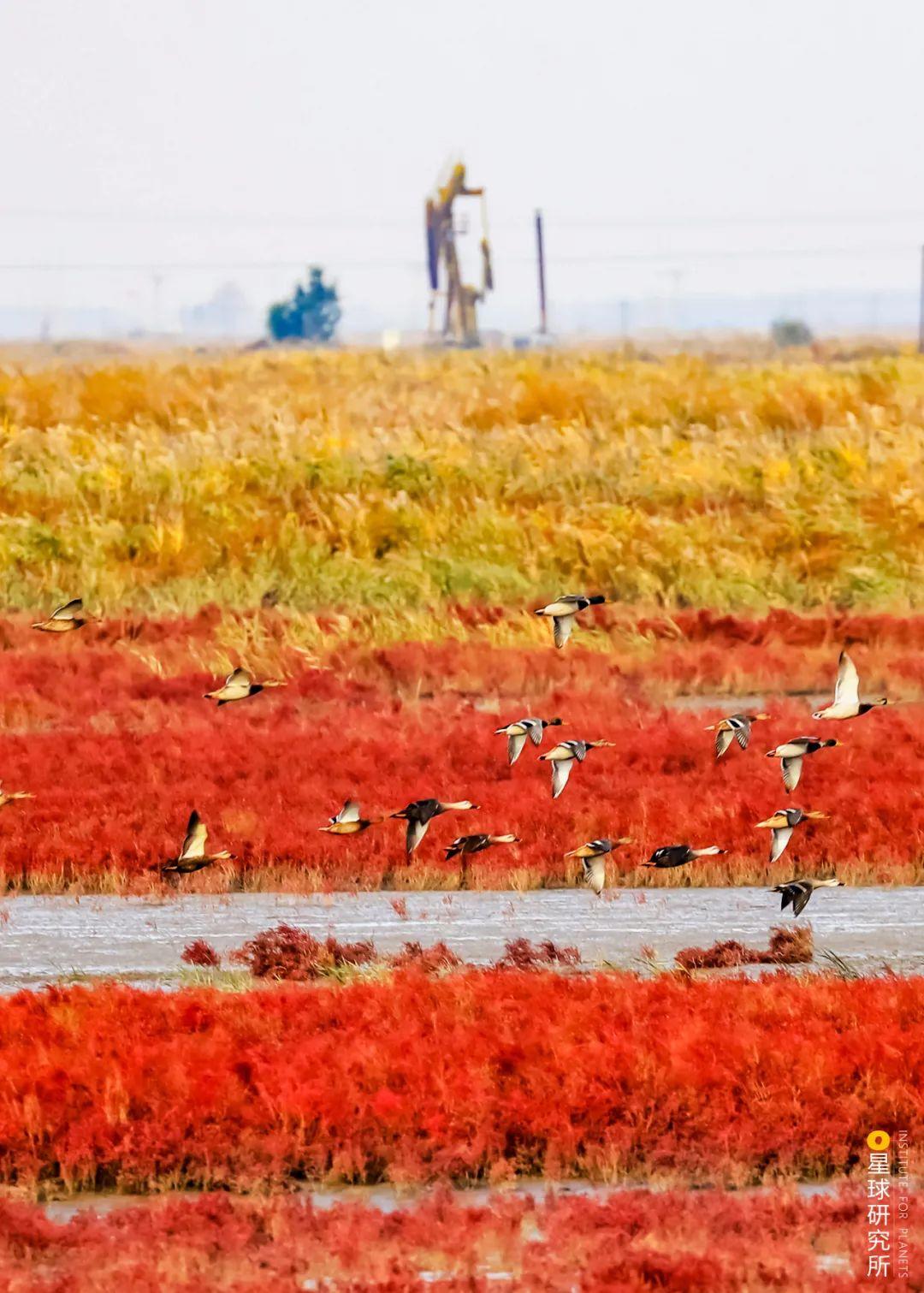 1400多种中国鸟金宝搏188体育,你认识几何?
