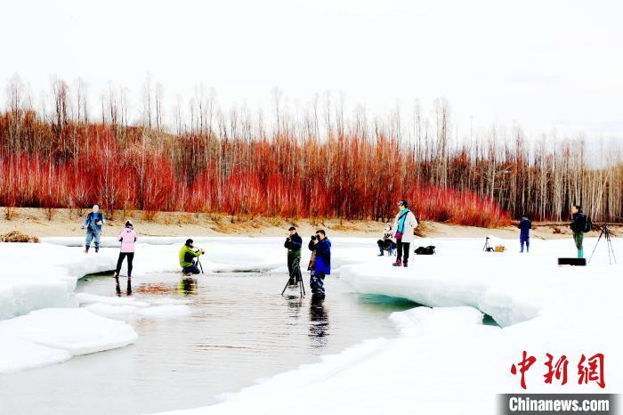 摄影旅游团在呼玛河沿岸拍摄冰河红柳美景。 冯宏伟 摄