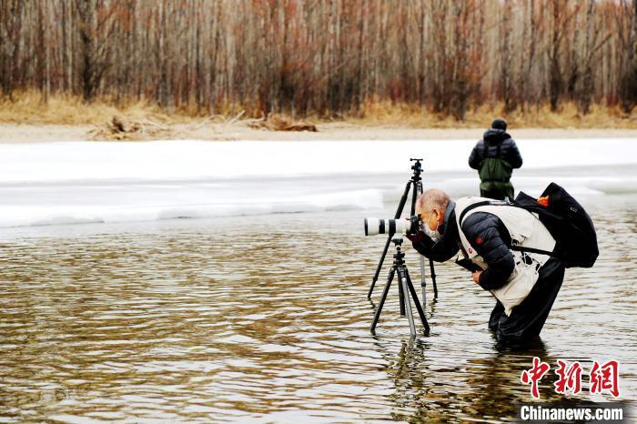 摄影爱好者在水中拍摄冰河红柳美景。 冯宏伟 摄
