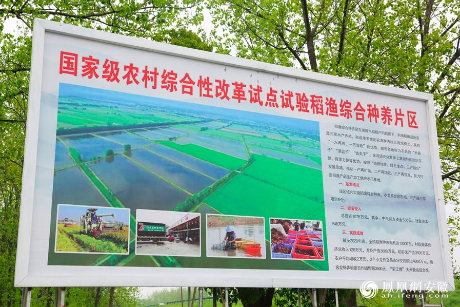东至县东流镇国家级农村综合性改革试点试验稻渔综合种养片区展示牌
