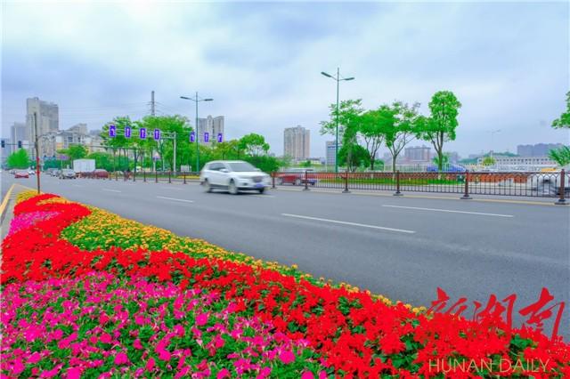(星沙城区街头鲜花盛放。章帝 摄)