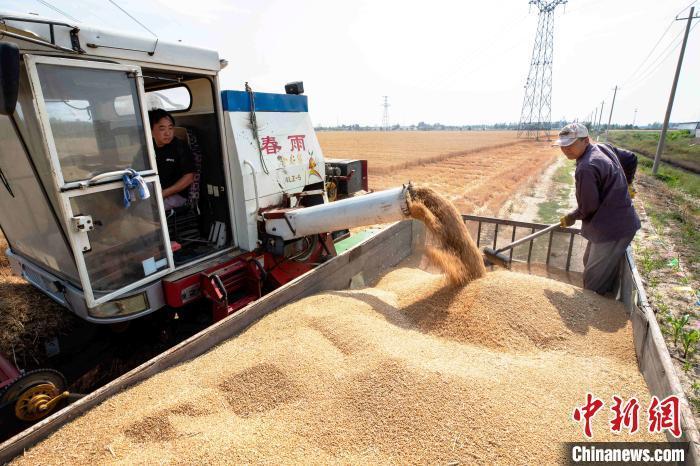 山东2020年小麦丰收场景。(资料图) 陈鹏 摄