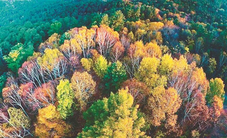 """秋季的""""五花山""""。 省林草局提供"""