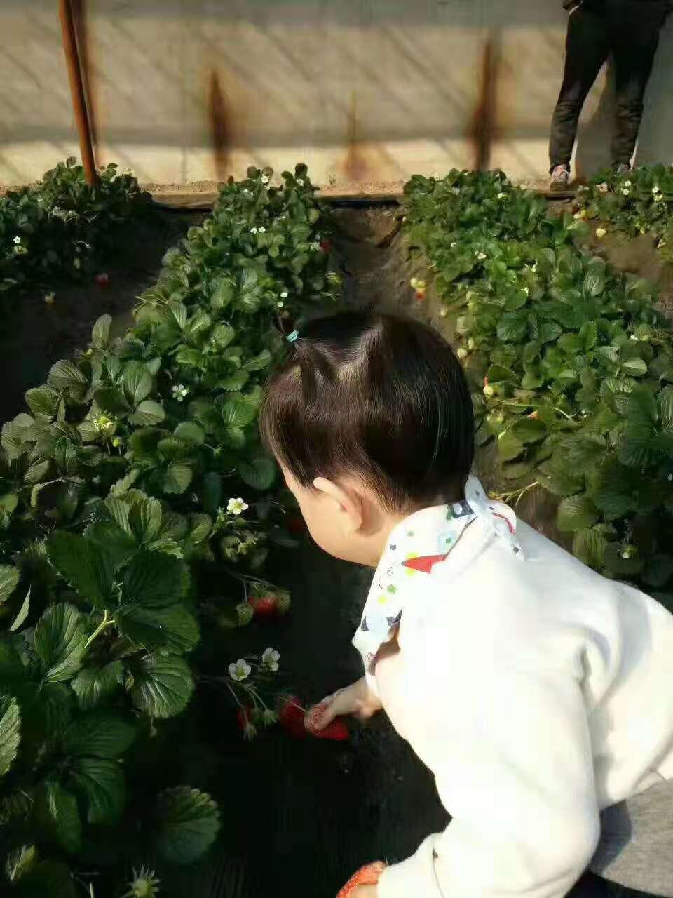 """沈阳财源花卉种植有限公司:邀您采摘""""放心菜篮子""""、绿色健康高品质蔬果"""