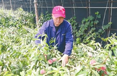 """沈阳市于洪区前辛台村带领村民采摘果蔬致富,生活""""果""""真甜"""
