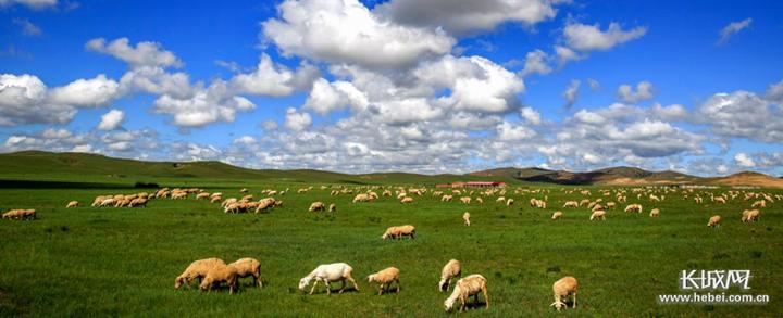 承德丰宁草原牧场,助力当地农民致富增收。资料图片