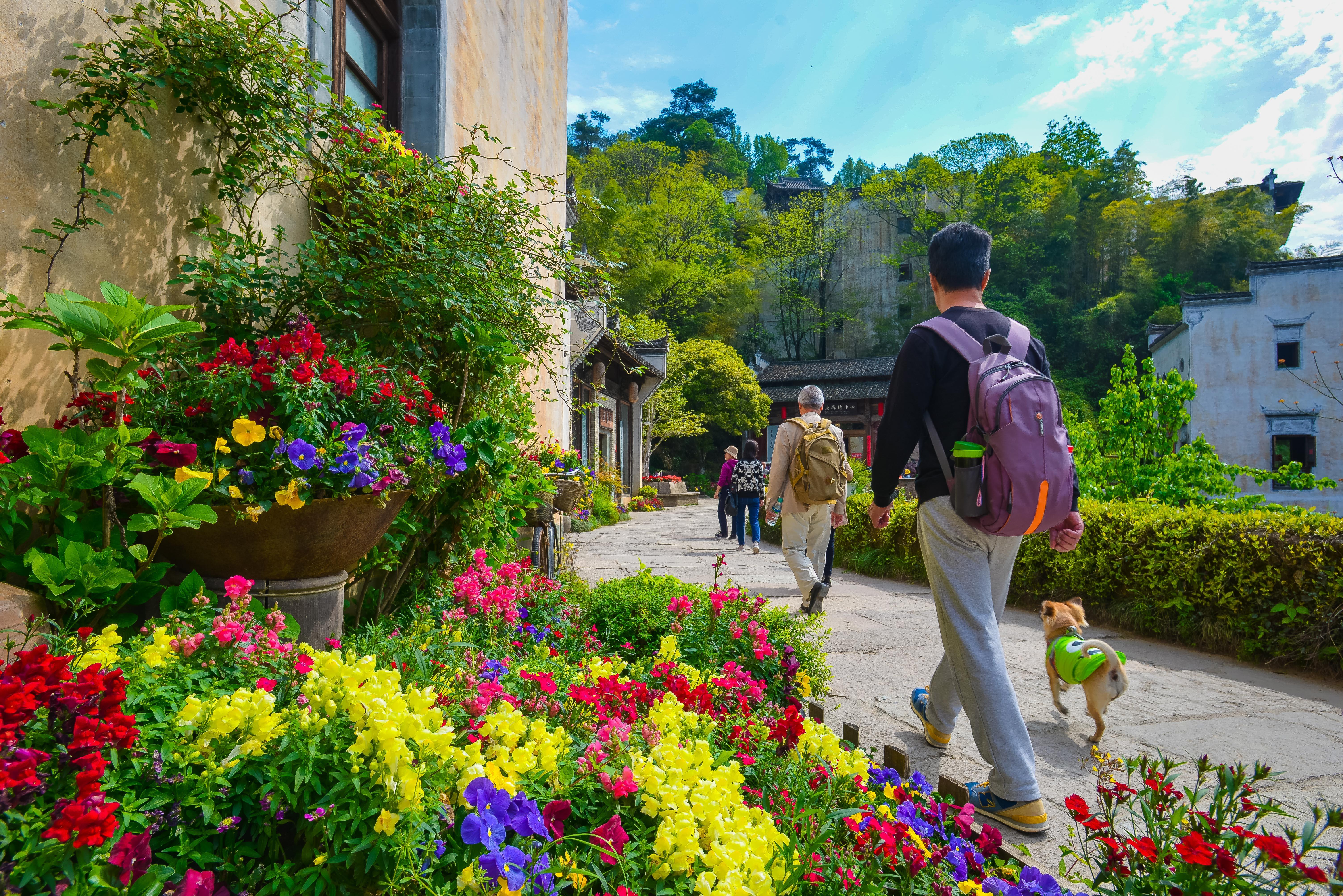 游客们漫步在篁岭鲜花小镇