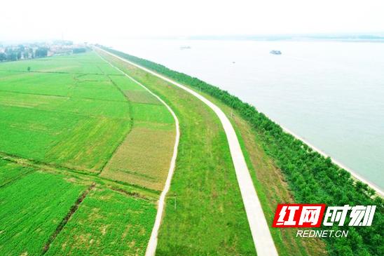 华容县长江干堤白洋村段岸线复绿现场。