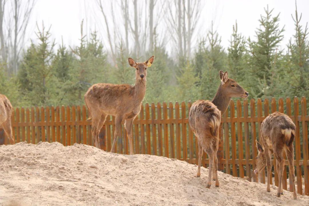 武威神州荒漠野生动物园开园在即!您准备好了吗?
