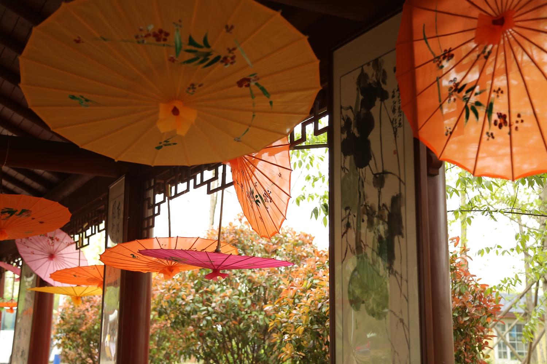 相约西海岸!第三届青岛国际牡丹产业园牡丹芍药赏花季启幕