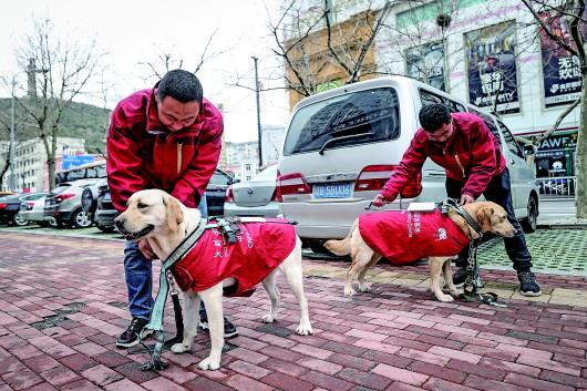 """4月23日,中国导盲犬大连培训基地的训导员付明岩(左)和姜博雅(右)为在训犬""""沐沐""""(左下)和""""酷K""""(右下)穿戴装备。"""
