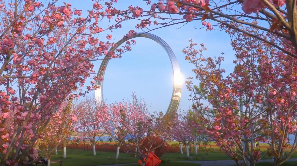 送你一份春日浪漫!威海荣成最美樱花季到来 趁着假期来打卡吧