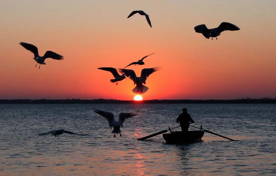 兴凯湖观鸟