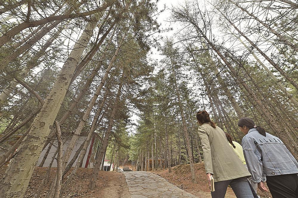 林地得到有效保护,树木枝繁叶茂。