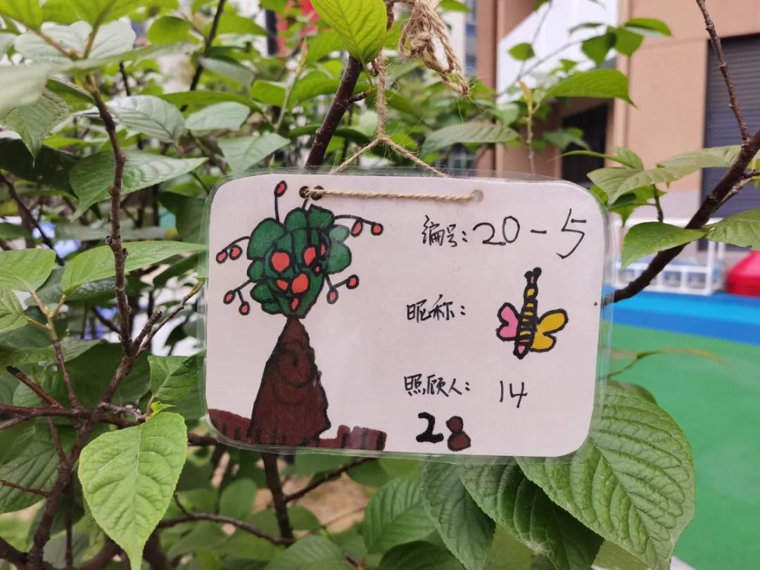 和春天有个约会 启源幼教的宝宝快来认领樱桃树啦!