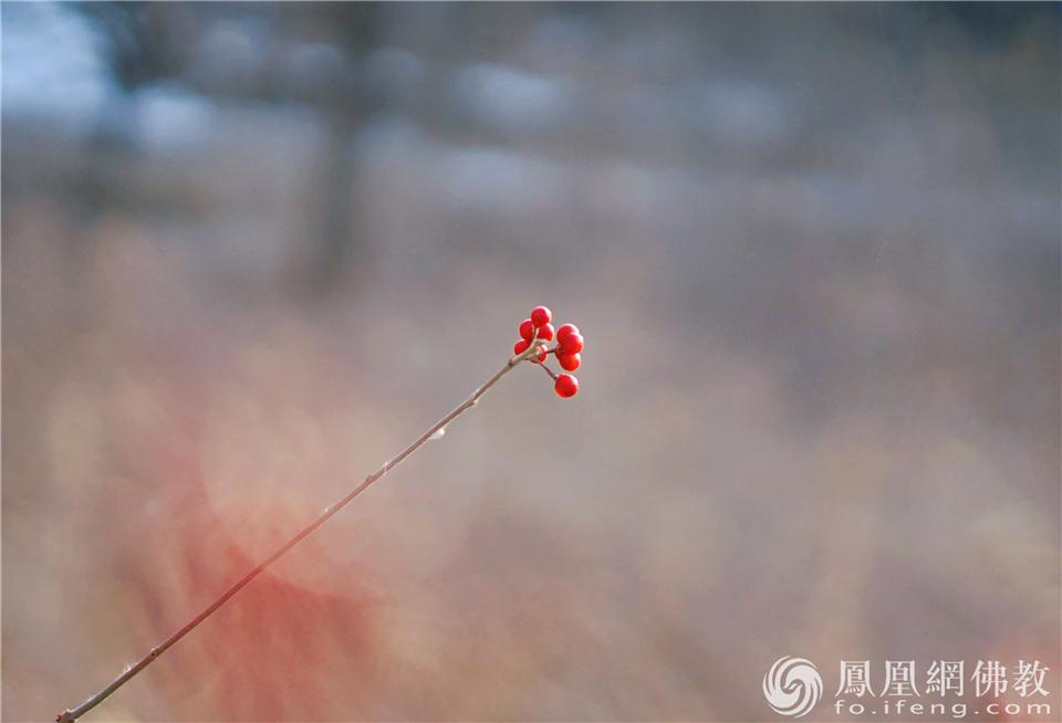 图片来源:凤凰网佛教 摄影:王子轩