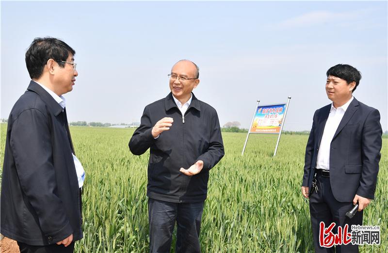 5月3日,省长许勤在邯郸市调研检查。这是许勤到肥乡区沃土种业小麦节水示范方,详细了解小麦新品种节水成效。河北日报记者孟宇光摄