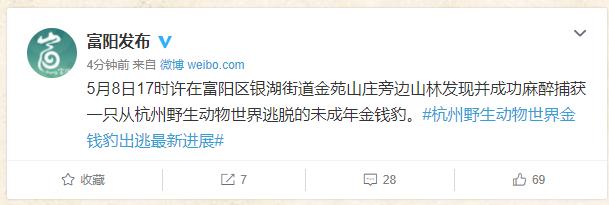 杭州出逃的第二只豹子找到了,成功麻醉捕获