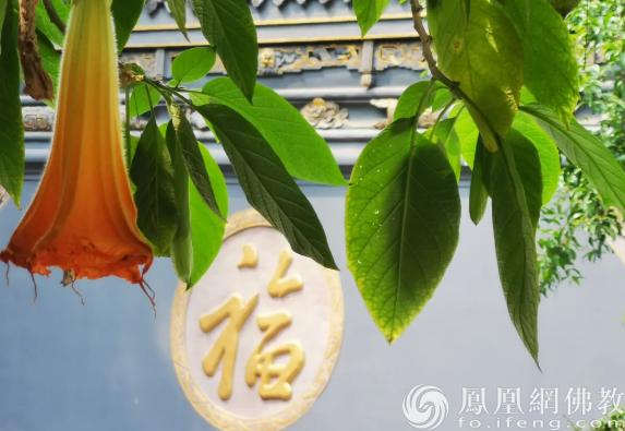 图片来源:凤凰网佛教 摄影:唐中