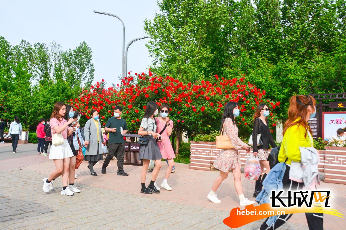 """龙泉湖已悄悄的成为了月季的""""网红打卡地"""",引无数游客拍照打卡留念。"""