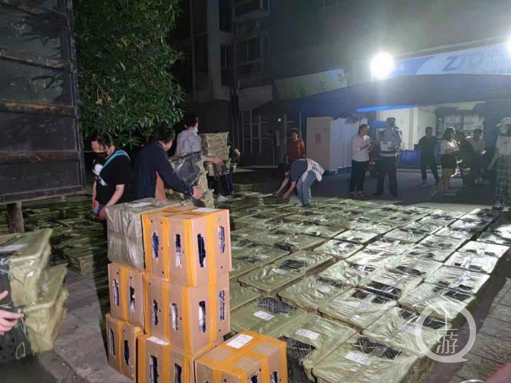 ▲5月4日,四川成都,义工将猫狗从车厢搬到地面通风透气。图片来源/受访者供图