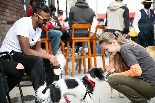 狗狗是受欢迎的市集宠儿
