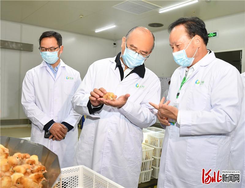 5月3日,省长许勤在邯郸市调研检查。这是许勤来到邯郸经济技术开发区的华裕农业科技有限公司国际家禽孵化中心,了解生产研发情况。河北日报记者孟宇光摄