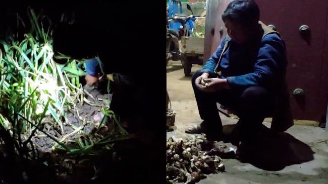 山东女孩五一返程 母亲连夜挖40斤蒜