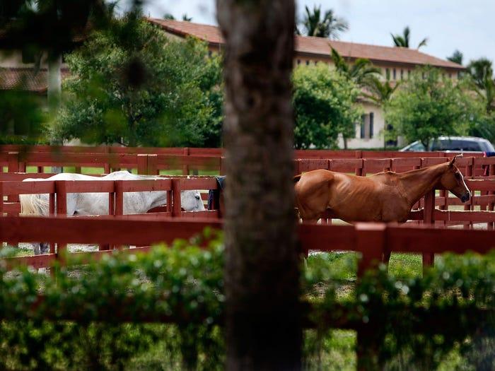 牧场中的马(非盖茨农场)