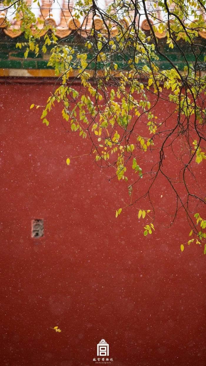 搭着红墙拍,树叶都会变得好看