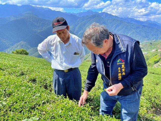 旱灾冲击!台湾中部茶叶损失超过亿元新台币,卢秀燕派官员勘灾