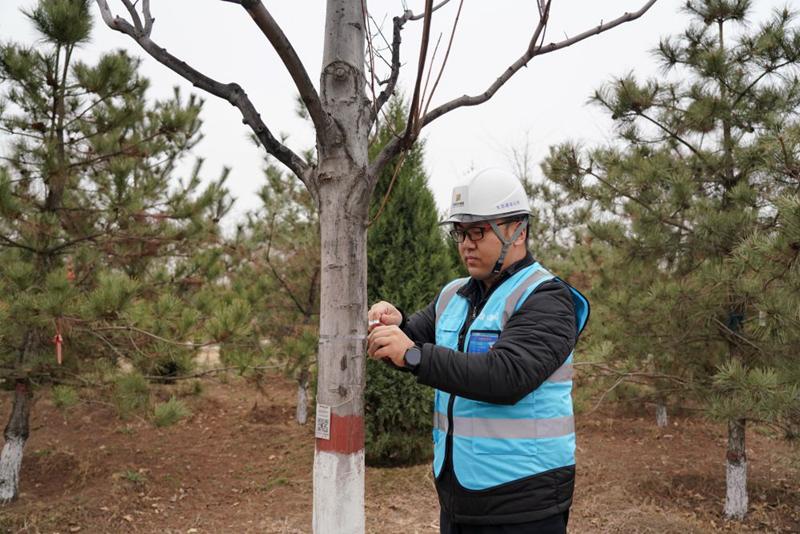 """黄雪晨在""""千年秀林""""内测量树木直径(2021年3月19日摄)。新华社记者牟宇 摄"""