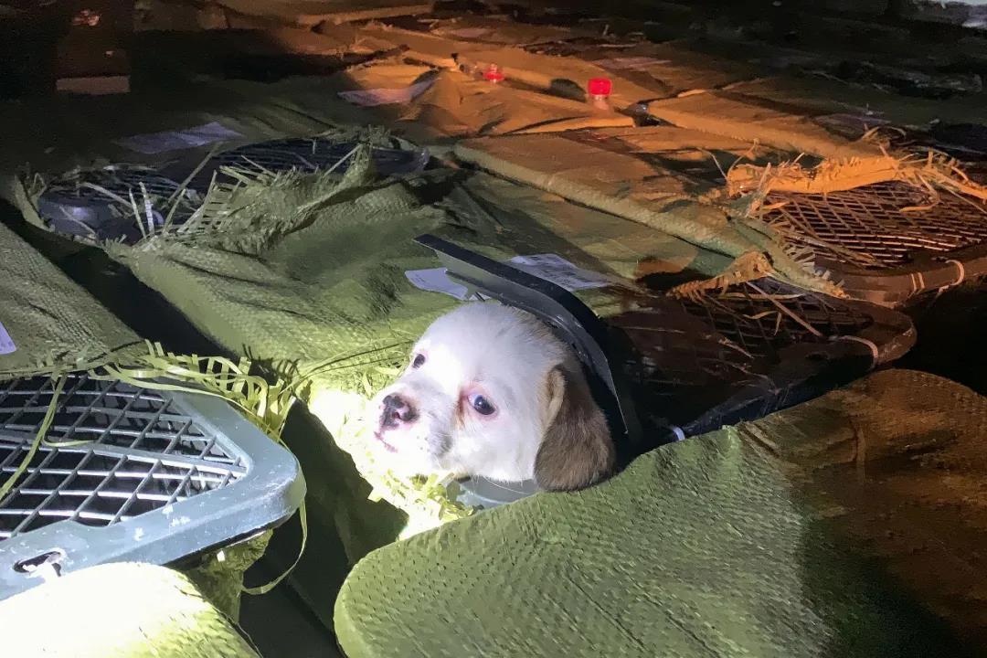 """(成都爱之家动物救助中心志愿者救助""""宠物盲盒""""宠物 图源人民视觉)"""