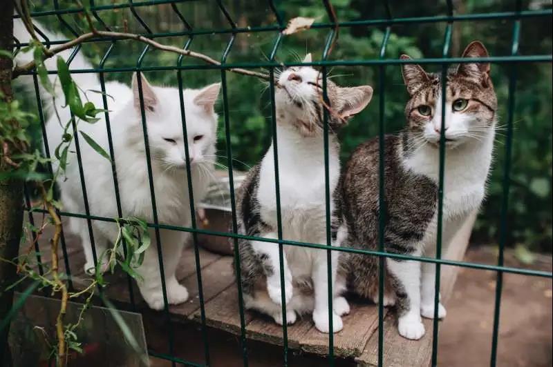 近几年全国两会上,也有多位代表委员曾提交关于制定反虐待动物法的议案和建议。