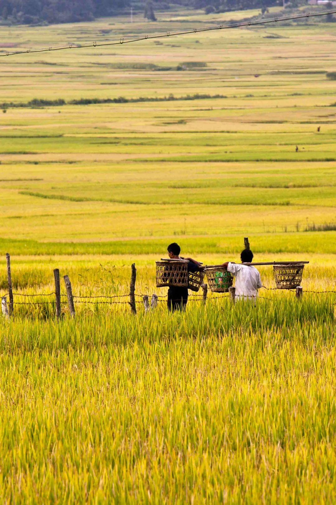 ▲金光熠熠的户撒乡 。摄影/朱边勇