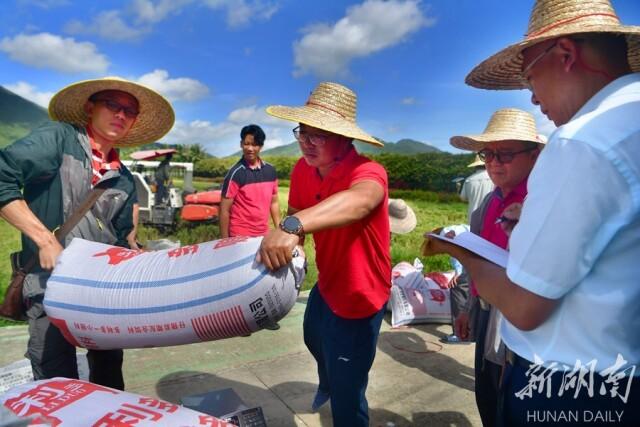 5月9日上午,湖南省杂交水稻研究中心海南省三亚市海棠湾基地,技术人员对3个地块的水稻同时收割、打谷后进行打包称重。