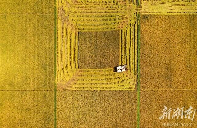 5月9日上午,湖南省杂交水稻研究中心海南省三亚市海棠湾基地,收割机对水稻试验示范田进行收割测产。