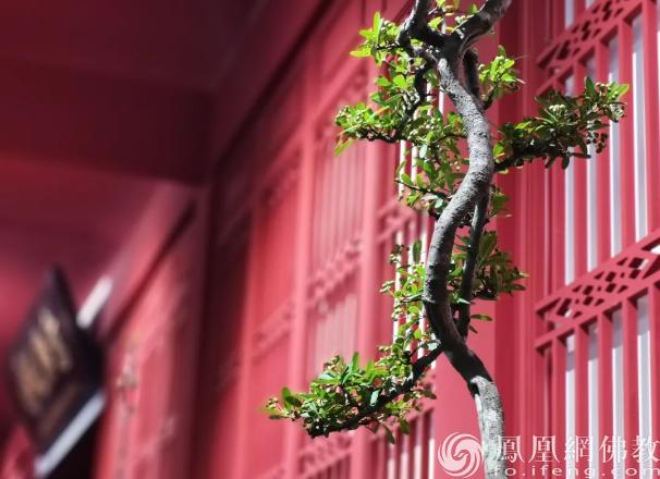 图片来源:凤凰网佛教 摄影:张科