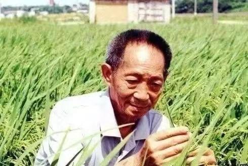 袁隆平:稻田守望者