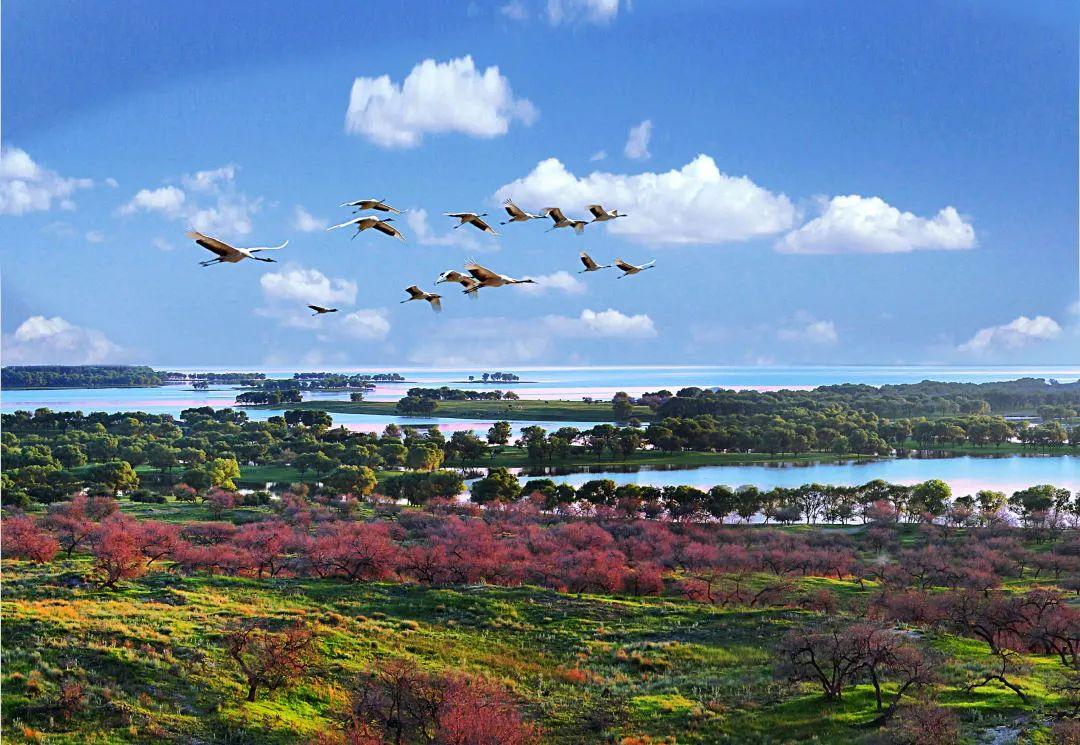 ▲向海国家湿地自然保护区