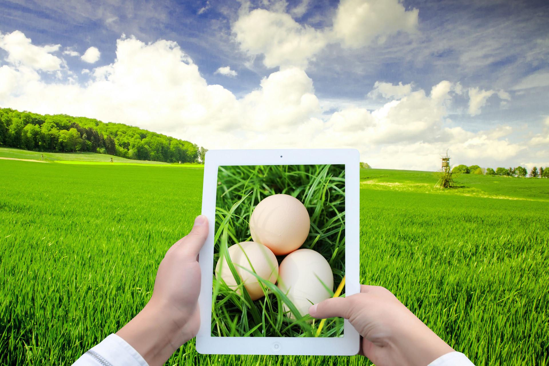 青岛2025年畜牧业产值将达千亿规模