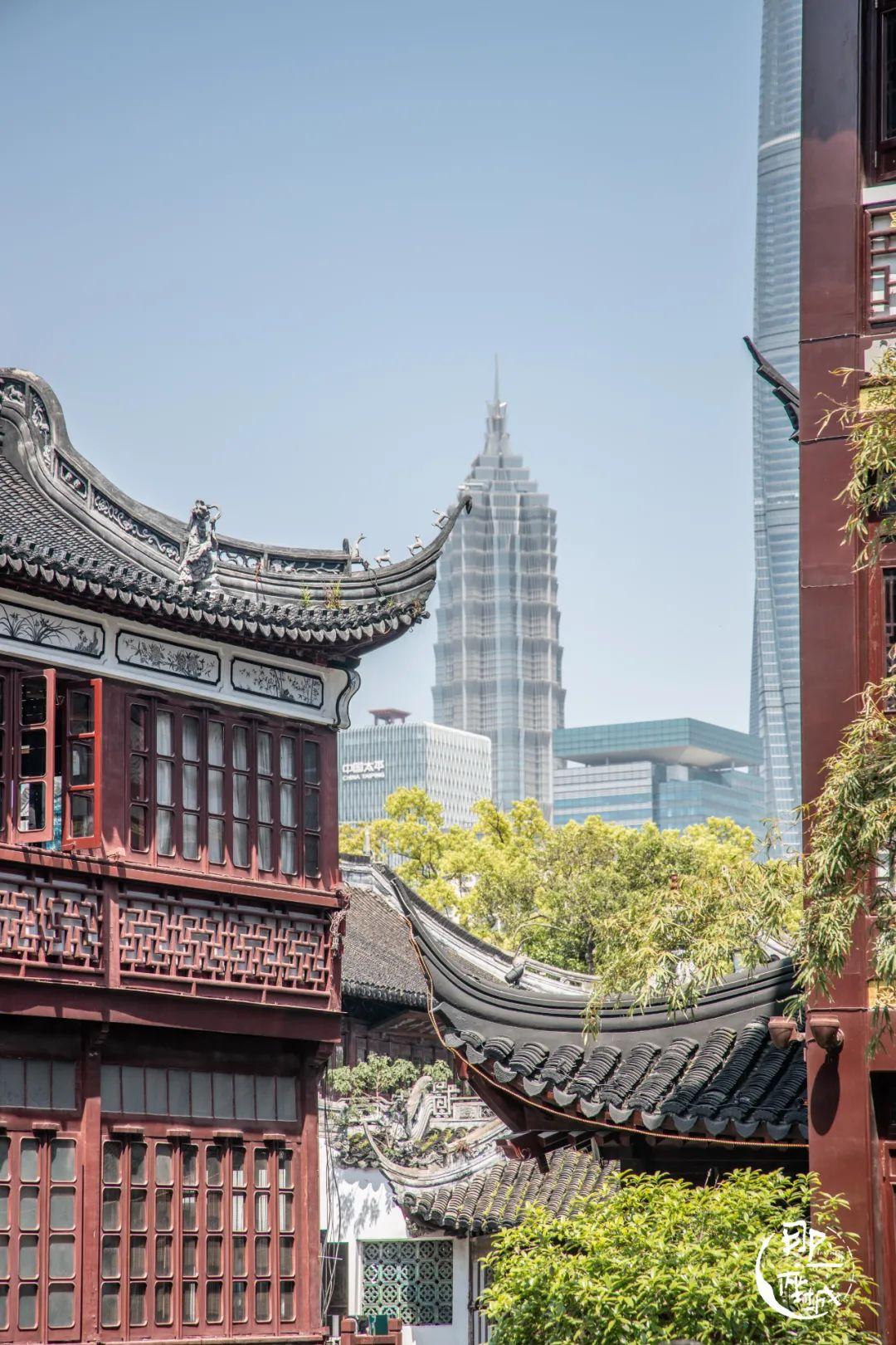 看懂這些照片的人,都離開上海了