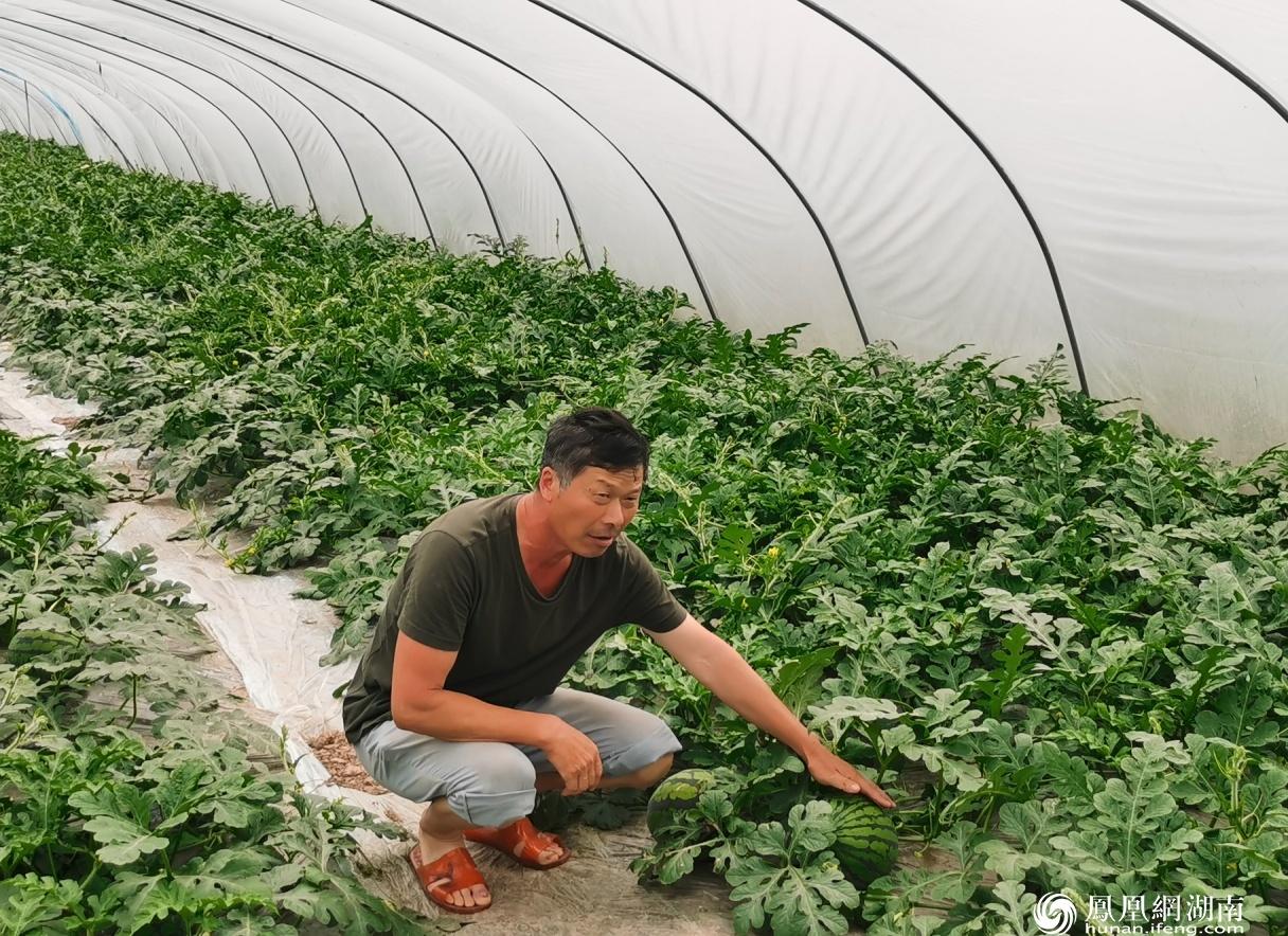 蔡国良在水果大棚介绍西瓜种植情况