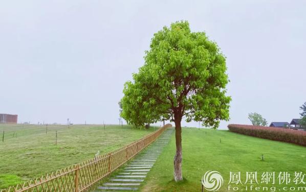 图片来源:凤凰网佛教 摄影:拙山