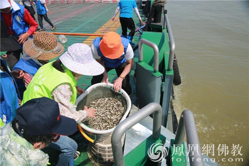 义工们合力搬运鱼苗(图片来源:凤凰网佛教 摄影:张尧生)
